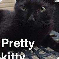 Adopt A Pet :: Pepper - McDonough, GA