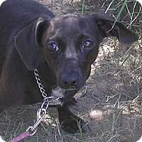 Adopt A Pet :: Dolly - Cross Roads, TX