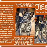 Adopt A Pet :: Courtesy Post-Jeep - Scottsdale, AZ