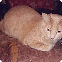 Adopt A Pet :: Chong - Farmington, AR