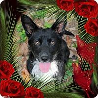 Adopt A Pet :: Danni - Crowley, LA