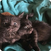 Adopt A Pet :: Max and Johnny - Mission Viejo, CA