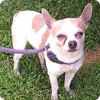 Adopt A Pet :: Cheerios - Metamora, IN