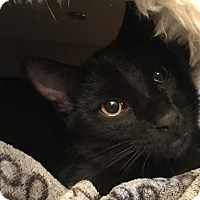 Adopt A Pet :: Shelton - Burlington, ON