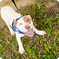 Adopt A Pet :: Hana - Muldrow, OK