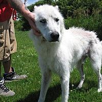 Adopt A Pet :: Grant - Port Clinton, OH