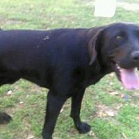 Adopt A Pet :: Pepper - Dothan, AL