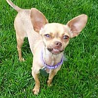 Adopt A Pet :: Jilly - Colorado Springs, CO