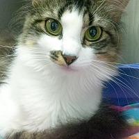 Adopt A Pet :: Sophia - Webster, MA