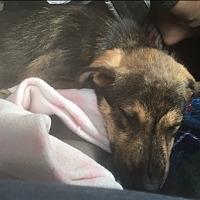 Adopt A Pet :: Bruce - White Settlement, TX