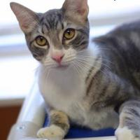 Adopt A Pet :: Jerry - Baton Rouge, LA