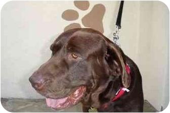 Labrador Retriever Mix Dog for adoption in San Diego, California - ZACH