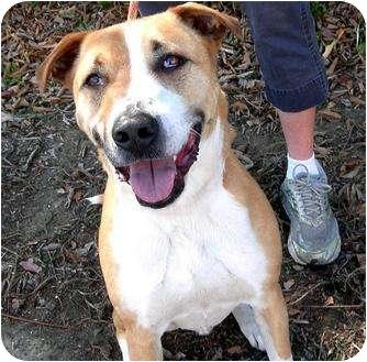 Shepherd (Unknown Type) Mix Dog for adoption in Vista, California - Dallas