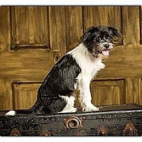 Adopt A Pet :: Sophie - Owensboro, KY