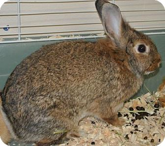 Other/Unknown Mix for adoption in Redmond, Oregon - Mamma Buns