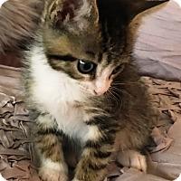 Adopt A Pet :: Smores - Orange, CA