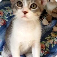 Adopt A Pet :: Chelsea - Key Largo, FL