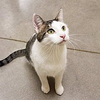 Adopt A Pet :: April - Edmond, OK