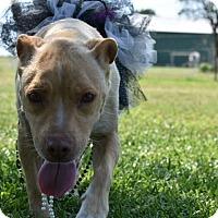 Adopt A Pet :: Maranda - Weatherford, TX