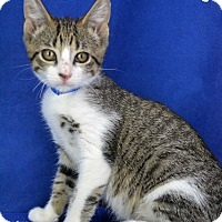 Adopt A Pet :: Porkchop - Carencro, LA