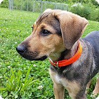 Adopt A Pet :: Lucy - Nashua, NH