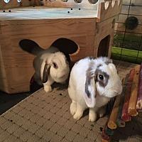 Adopt A Pet :: Coco and Emma - Waynesboro, VA