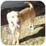 Photo 1 - Labrador Retriever Mix Dog for adoption in Evergreen, Colorado - Quincy