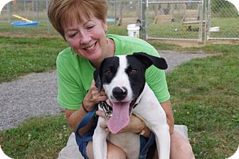 Bull Terrier Mix Dog for adoption in Elyria, Ohio - Apache