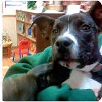 Adopt A Pet :: DJ - Scottsdale, AZ
