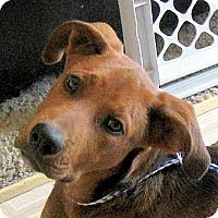 Adopt A Pet :: Baby Neo - Oakley, CA
