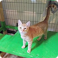 Adopt A Pet :: Huey - Catasauqua, PA