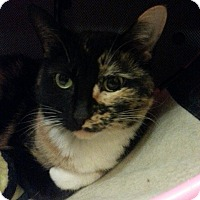 Adopt A Pet :: Lisa - West Dundee, IL