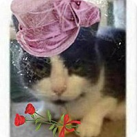 Adopt A Pet :: ARTIE - ORPHANED SENIOR SIBLIN - Rochester, NY