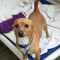 Adopt A Pet :: Cooper - Santa Clarita, CA