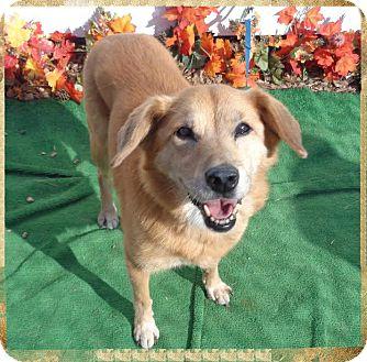 Retriever (Unknown Type)/Collie Mix Dog for adoption in Marietta, Georgia - GINGER