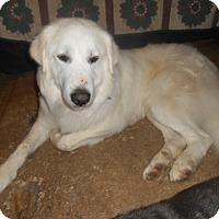Adopt A Pet :: Yeti - North Jackson, OH