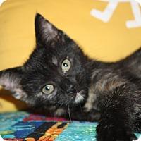 Adopt A Pet :: Foalie (LE) - Little Falls, NJ