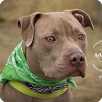 Adopt A Pet :: Peanut - Gardnerville, NV