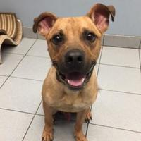 Adopt A Pet :: Wally - Buffalo, NY