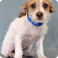 Adopt A Pet :: Armani - Waldorf, MD