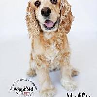 Adopt A Pet :: Molly - Sherman Oaks, CA