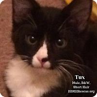 Adopt A Pet :: Tux - Temecula, CA