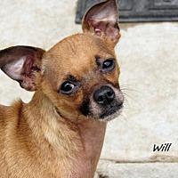 Adopt A Pet :: Will - Oklahoma City, OK