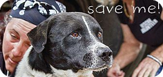 Labrador Retriever Mix Dog for adoption in Ft. Lauderdale, Florida - Houston