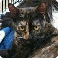Adopt A Pet :: Rosa Lee - Modesto, CA