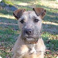 Adopt A Pet :: Holly - Mocksville, NC