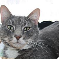 Adopt A Pet :: Woody - Orillia, ON