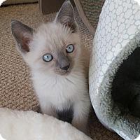 Adopt A Pet :: Remus - San Fernando Valley, CA