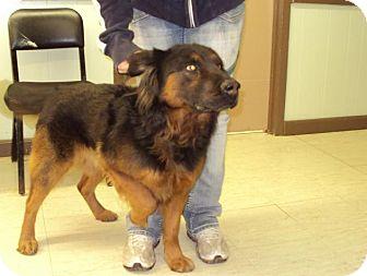 Shepherd (Unknown Type) Mix Dog for adoption in Mt. Vernon, Illinois - Mitts