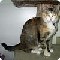 Adopt A Pet :: Hannah - Powell, OH